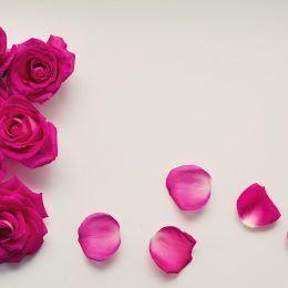 Cánh hoa hồng