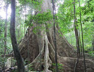 Mùi hương gỗ và rêu
