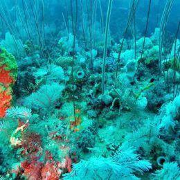 Hương gỗ biển