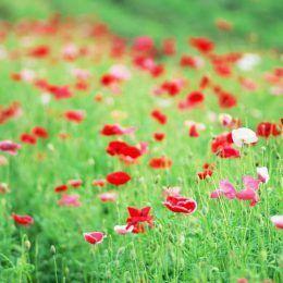 Hương hoa cỏ