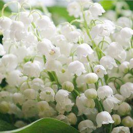 Hương hoa cỏ, xạ hương