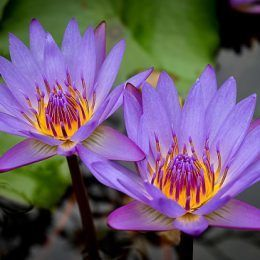 Hương hoa cỏ biển
