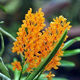 Hương hoa cỏ - gỗ - xạ hương