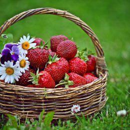 Hương hoa cỏ trái cây