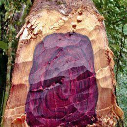 Gỗ hồng mộc Brazil