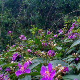 Lá hoa tím