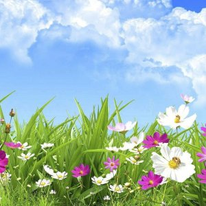 Mùi hương hoa cỏ