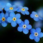 Nước hoa tester là gì ?